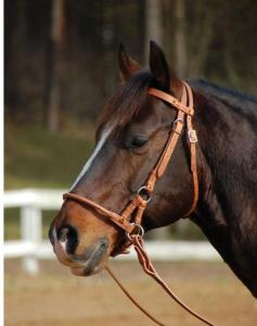 Sidepull BUSSE Harness - pony